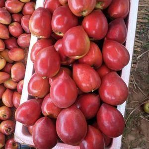 油桃大量上市,中油5,126油桃,中油4,中油7,桃园大...