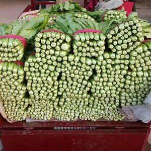 河北省邯郸市永年油麦菜,一年四季常年供应,电话13483...