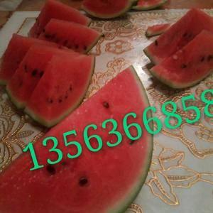 山东省潍坊市寒亭区大棚西瓜基地品种有早春红玉,精心西瓜