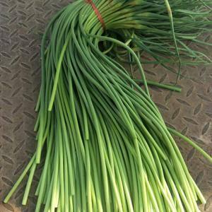 金乡蒜薹大量上市,冷库出租,发市场预冷,精品蒜薹加工