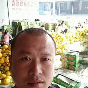 山东莘县瑞红香瓜大量上市,欢迎广大客户前来收购。