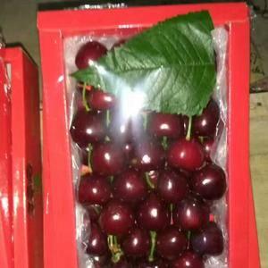 大荔樱桃大量供应品种有早大果,红灯,美早,沙迷脱,黄米等...