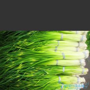 河南杞县蒜薹量多优惠了。一天成交量在5000吨左右。