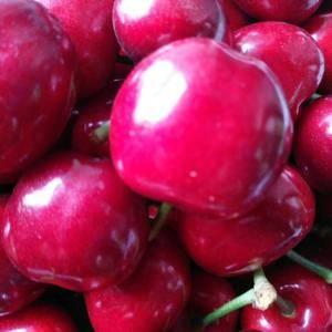 临朐大樱桃是山东省潍坊市临朐县的特产。所产大樱桃个大色...