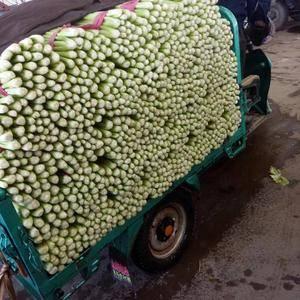 河北省邯郸市永年芹菜大量上市中,有需要的老板们打电话联系...