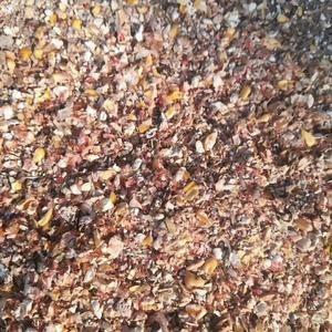 常年出售玉米筛漏适用于:鸡,鸭,鹅,羊,牛养殖为养殖户降...