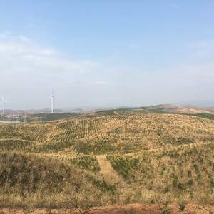 3200亩茶油直销,100%纯正,可药用,可食用,支持代...