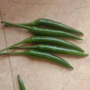 广西横县指天椒准备大量上市欢迎个位老板定购。