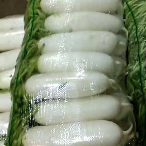 优质白萝卜有现货,质量好,价格低。