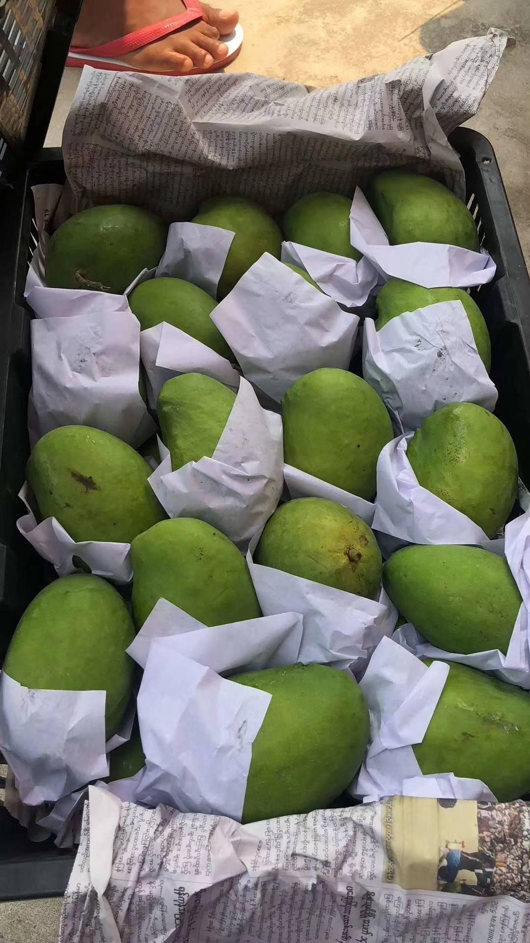 园圣觹�$y�9�%9�._【圣德龙】芒果中的极品!原产地缅甸,淳朴而神秘的佛.