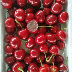 山东樱桃产地大量上市。价格便宜,货源充足。品种齐全183...