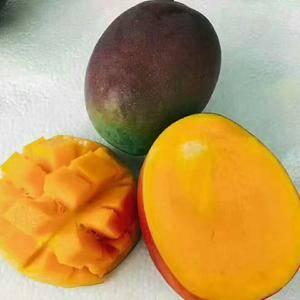 吉禄芒果是攀枝花芒果品种之一