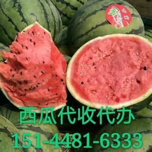 辽宁省新民大棚西瓜供应期在5月份左右, 6-7月份将大批...