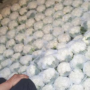河北南部最大市场,常年供应各种蔬菜?本地精品雪玉菜花,青...