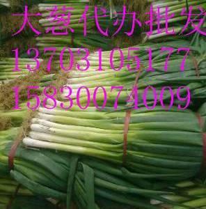 出售长白大葱价格优惠   有需要的联系了   就是相片上...