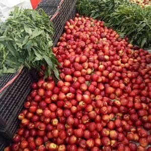 15265948318山东优质油桃大量供应,价格便宜了