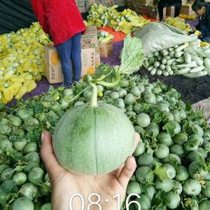 费县甜瓜大量上市中,白甜瓜0.89元,绿宝石1.4-2元...