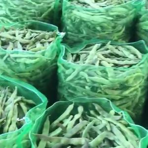 山东聊城紫花油豆现已开始大量上市。适合各类蔬菜批发市场。...