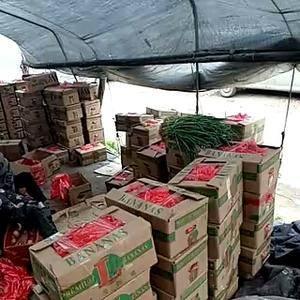费县的二茬西红柿大量上市中。