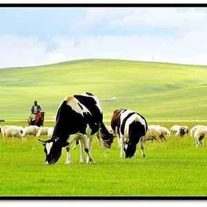 呼伦贝尔大草原生态旅游资源,纯呼伦贝尔草地牛羊!天然有机...