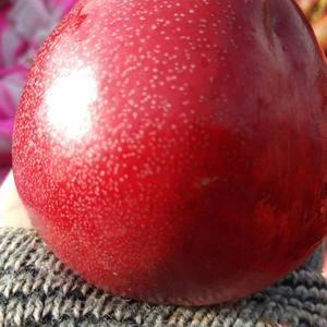 专业代办代收油桃 樱桃 草莓 葡萄等新鲜水果