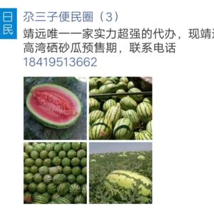 甘肃靖远硒砂瓜预售期,预计六月中上市