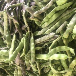 山东聊城紫花油豆现已开始大量上市,暖棚以结束,陆地开始。...