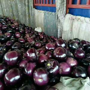 永年蔬菜市场四区171号防窜出,茄子等各类蔬菜水果应有尽有几座。常...