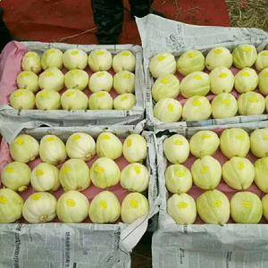 广大甜瓜经销商你们好,辽宁甜瓜种植面积大。5至6月份大量...