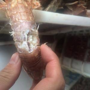 常年盛产各类海产品,并且已形成庞大的市场规模,日生产上百...
