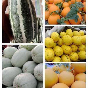 大量供应,代收香瓜甜瓜,如羊角蜜,东方蜜,瑞红,胶蜜25...