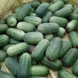 33冬瓜和水果小冬瓜现大量上市,瓜型好价格低