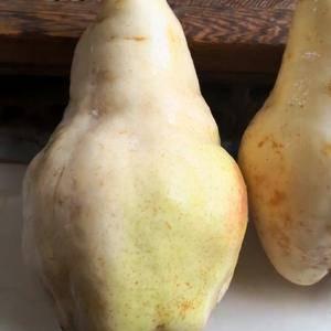 佛手梨,因其外形像佛手瓜而得其名,九月中旬成熟,刚下树时...