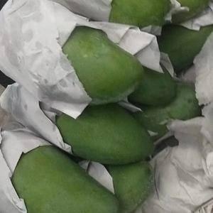 越南大青芒,物美价廉,600斤起批