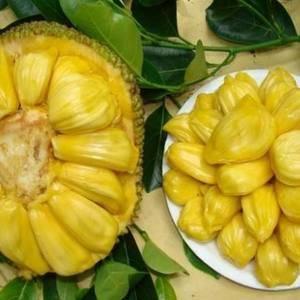 马来西亚1号菠萝蜜,10-15公斤,有需要的联系。