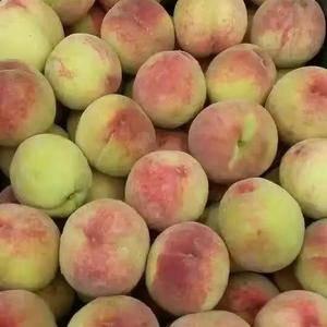 河北辛集雨花露桃,红葵桃大量上市,货源充足专业代办