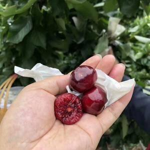 黑珍珠樱桃,樱桃中最好吃的品种,丝毫不比国外车厘子差。紫...