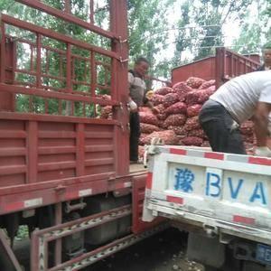 河南中牟县大蒜供应,13673686490,每天500吨...