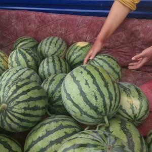大量供应陕西西瓜