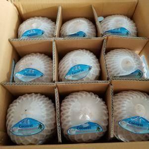 泰国香水椰