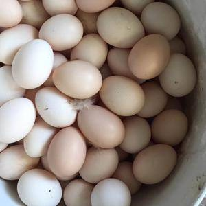本人有家鸡蛋,果场鸡蛋,可以礼盒3O个装,如有需要,可以...