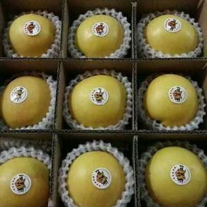 黄金油桃,各种毛桃大量上市,口感脆甜,硬度好,耐运输。电...
