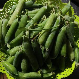 豌豆种,籽粒饱满,无虫口,颜色鲜绿。