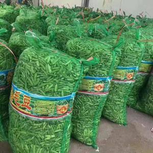 邳州大量毛豆已上市,本地种植面积广阔。每年六月中旬直至九...