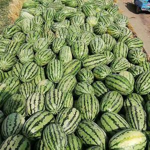 优质西瓜,甜度高,欢迎采购