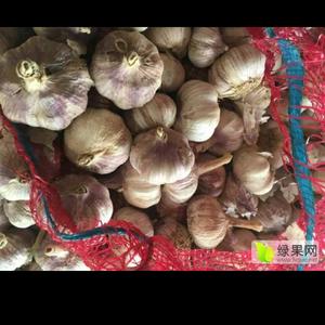 山东聊城莘县紫皮干蒜,蒜头,蒜把现已开始大量上市,可以做...
