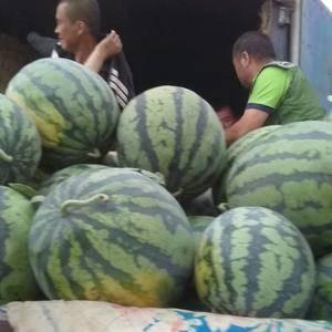 锦州凌海地区西瓜大量上市了,个头大,口感甜,欢迎新老客户...