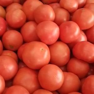 西红柿大量上市永年蔬菜市场张立强13483408502