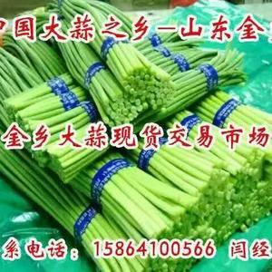 本公司常年供应各种规格优质金乡大蒜、蒜苔、洋葱、三英椒,...
