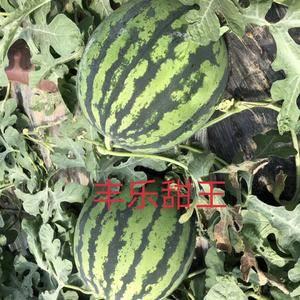 甜王西瓜大量上市,头茬瓜,八斤打底,八成熟以上,每市斤0...